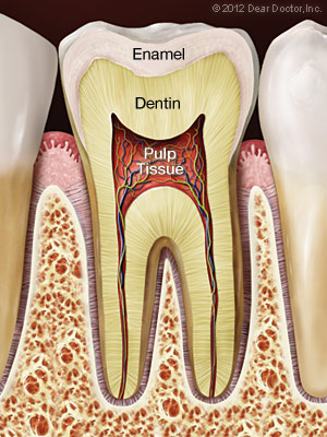 Root Canal Treatment Lincoln Park, Lakeview & Chicago