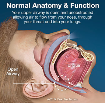 Normal Anatomy and Function.
